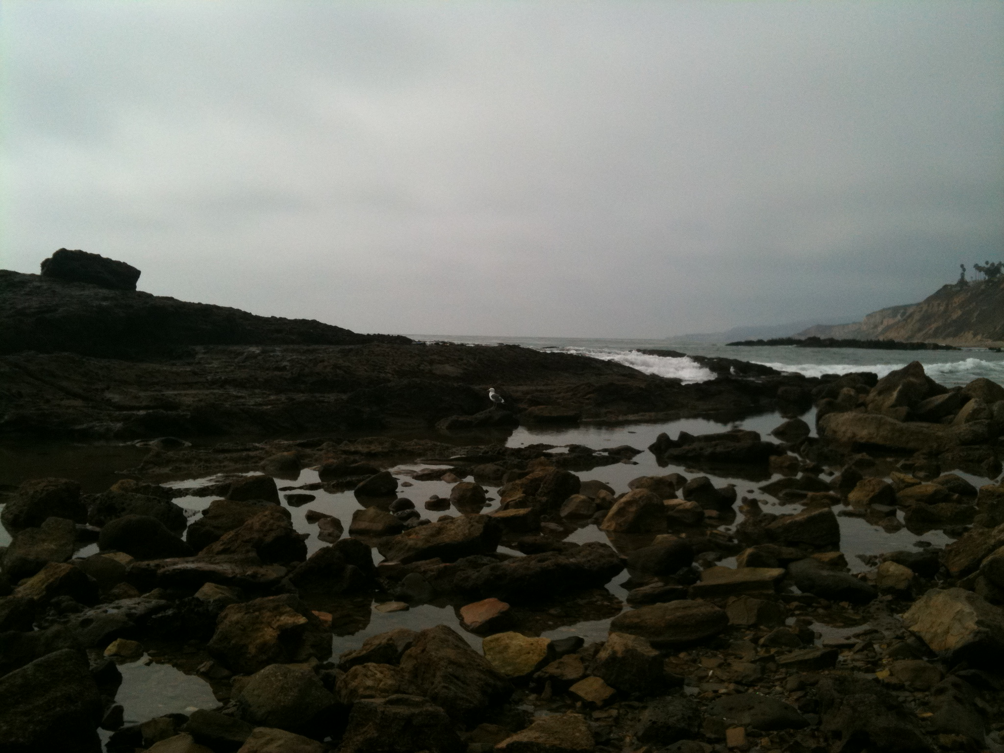White point tide pools swimming with sea life and chock full of white point tide pools swimming with sea life and chock full of rocks real mom time rmt nvjuhfo Gallery