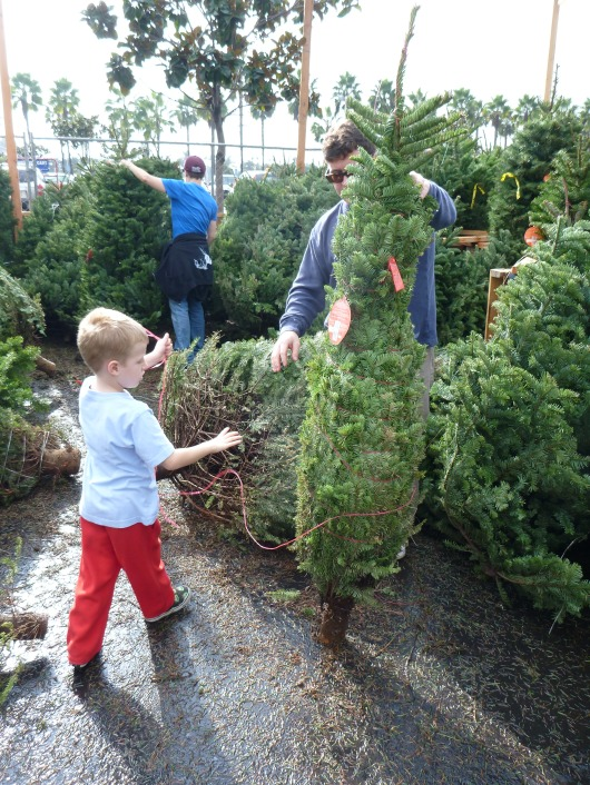 This was the tree we eventually got. T loves it!