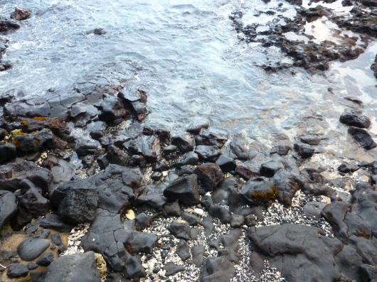 Black crabs scurry along the rocks below Huggo's restaurant and bar in Kona, HI.
