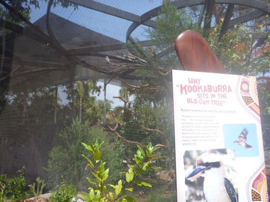 The kookabura bird inside the newly opened Outback exhibit at the San Diego Zoo.