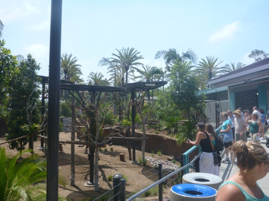 "A wide shot of the newly opened ""Koalafornia Dreamin' "" exhibit at the San Diego Zoo."