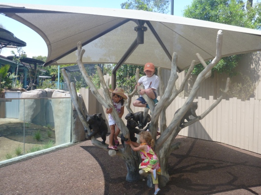 "T and some other kids climbing a ""eucalyptus tree"" at Koalafornia Dreamin' inside the San Diego Zoo."