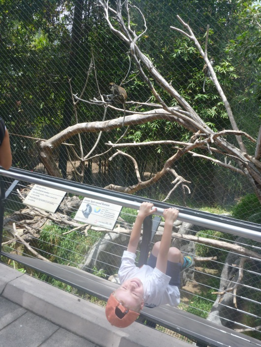 T hanging around with the monkeys at the San Diego Zoo.