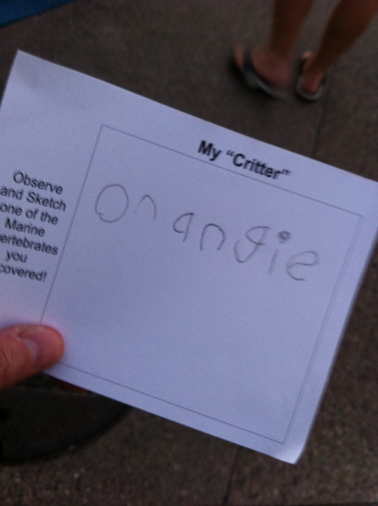 "T named a critter ""Orangie""... I wish he'd sketched it because I tried to find it in the bucket but couldn't!"