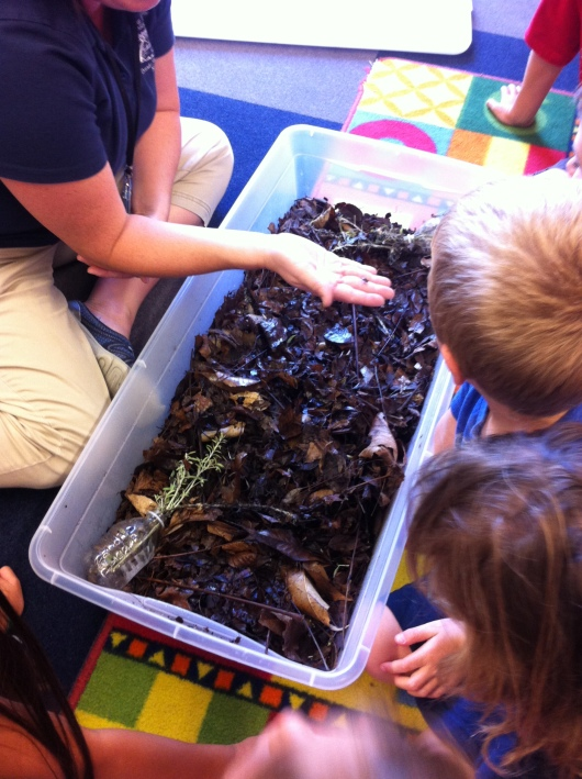 T and the other kids looking through a tub of compost, home to several beetle and bug species.
