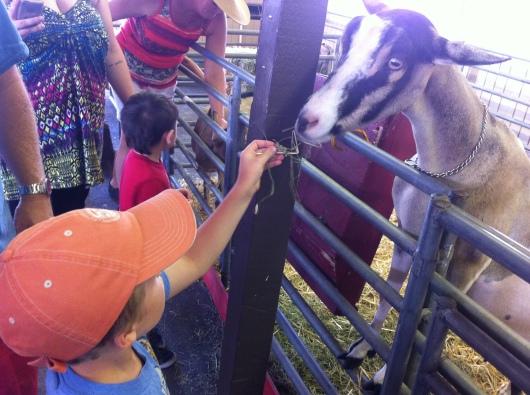 Award-winning goats need their alfalfa, right RMT'ers?