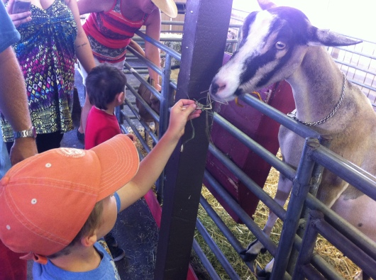 Award-winning goats need their alfalfa, right RMT'ers?