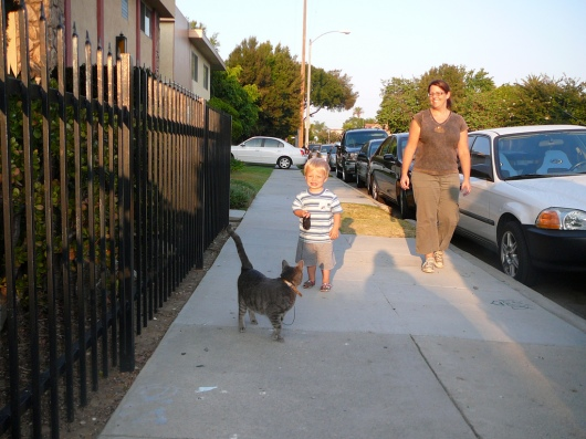 T walking Remy the Cat in 2009. Even back at the ripe age of 1-1/2 T started to learn what it means to be a great neighbor.
