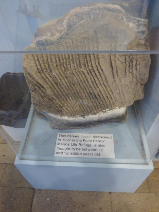 Local artifacts like this fossil are on display to visitors at the Cabrillo Marine Aquarium.