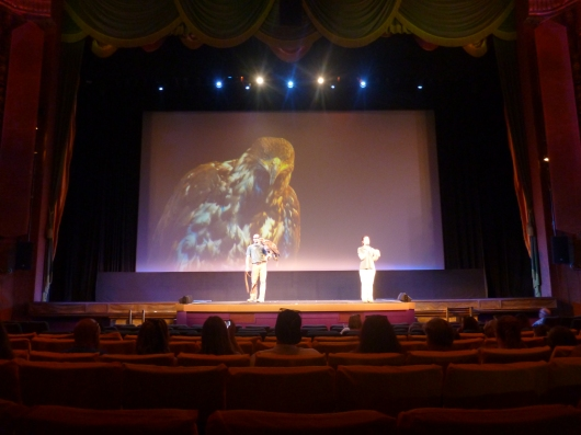 Dakota the Bald Eagle swooped in with the Wildlife Learning Center along with a few other feathered friends before the Planes screening at the El Capitan Theatre.