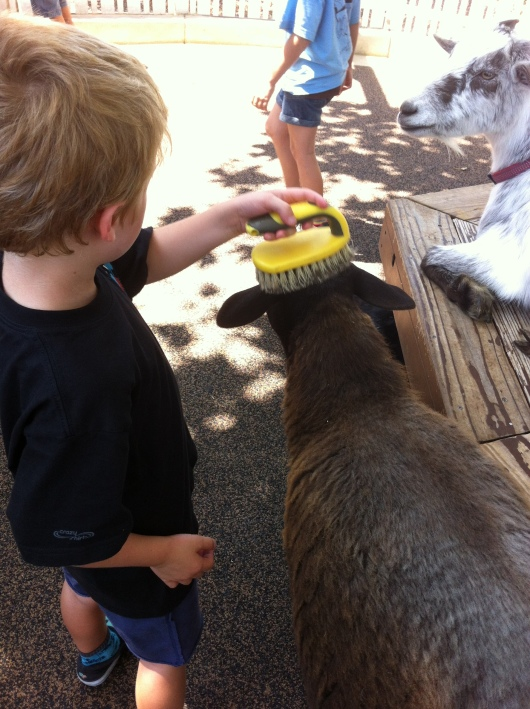 After a few free-falls on Adventure City's Drop Zone, T took a soothing break in the nearby Petting Farm.