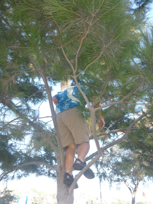 C going to retrieve one of many of the party favor rockets from a nearby tree.