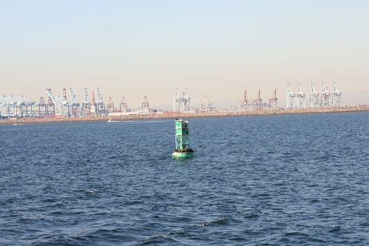 Seals and sea lions are a common sighting on the buoys around the harbors of Long Beach.