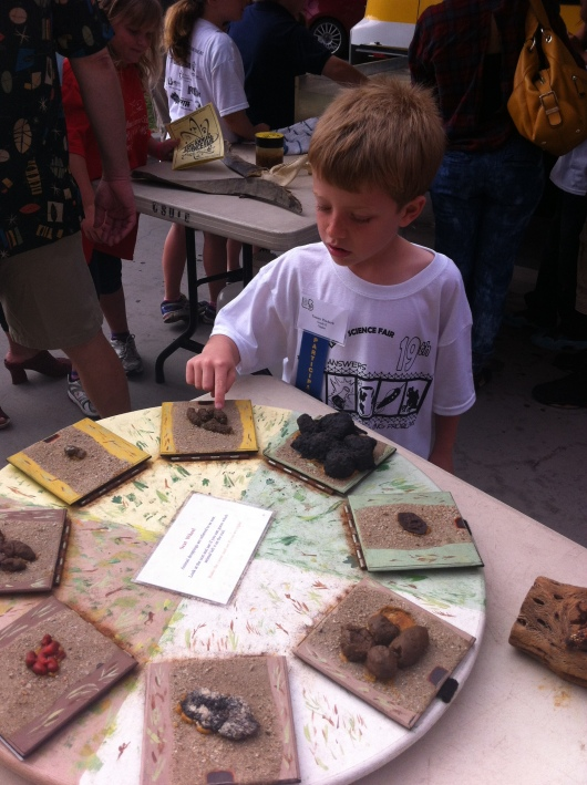 That's poo, T. All kinds of models of animal poo. But the kids loved it as they waited their turn at this year's district science fair.