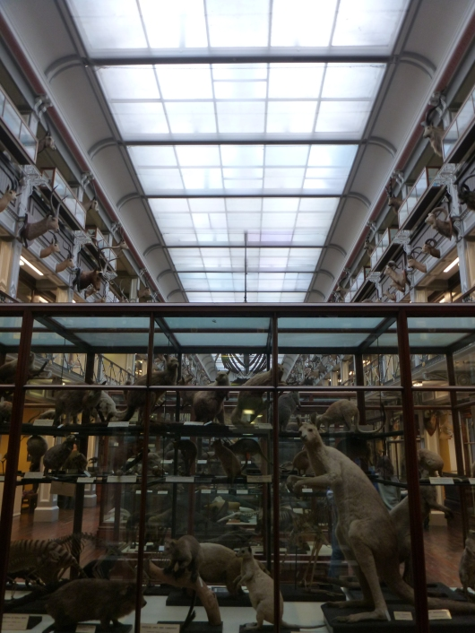 "National Museum of Ireland, Natural History, Dublin. AKA the ""Dead Zoo."""